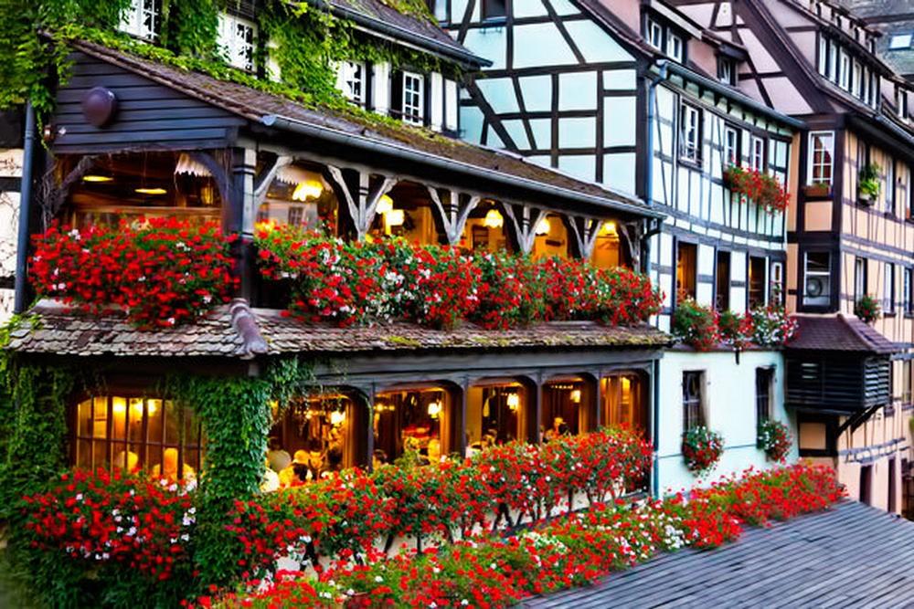 Les géraniums en Alsace !